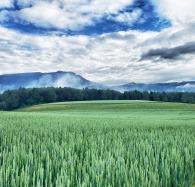 Jura mountains 3